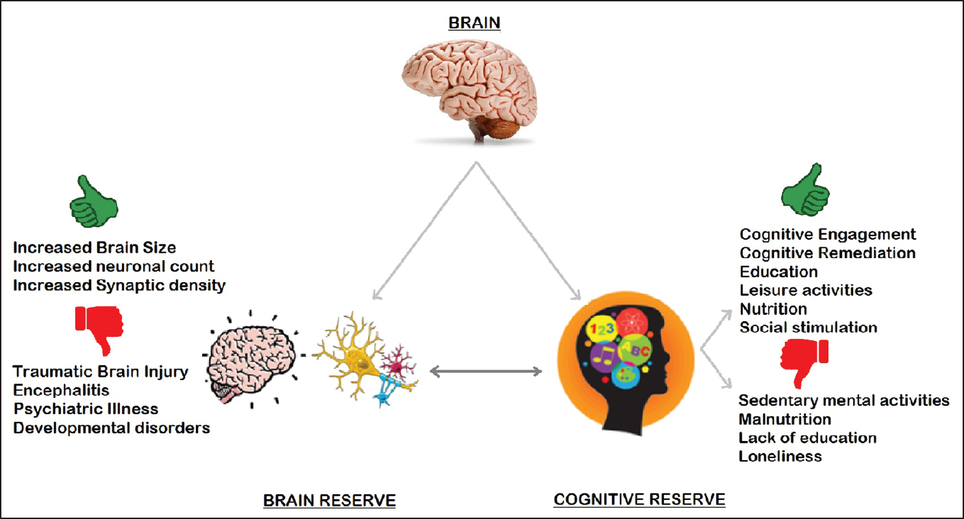 Engaged Brain Tied to Lower Cognitive Risk